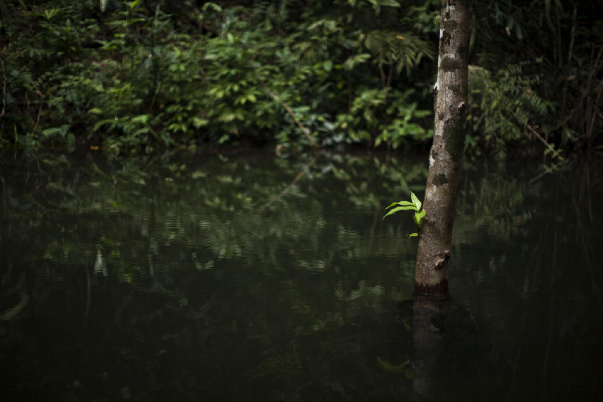 karolinafox jungle_12